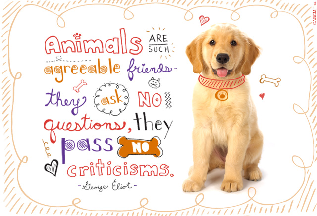 Pet Quote: Animals are such agreeable friends - they ask no questions, they pass no criticisms.