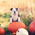 (Pumpkin) Spice Up Your Social Network With Our Fall Cover Photos