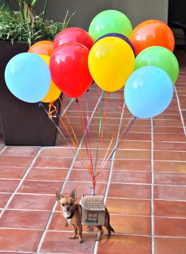 Pet Halloween Costumes - Up Pup