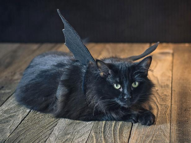original_Sam-Henderson-cat-Halloween-costume-bat-wings-beauty-horiz2.jpg.rend.hgtvcom.616.462