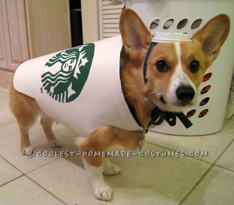 Pet Halloween Costumes - Pup Latte