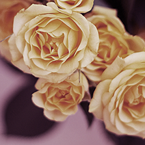 Flower Gift Ideas: Yellow Roses