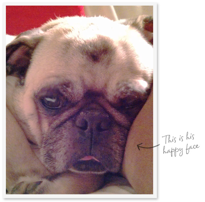 Photo of a pug with a note saying 'this is his happy face'.