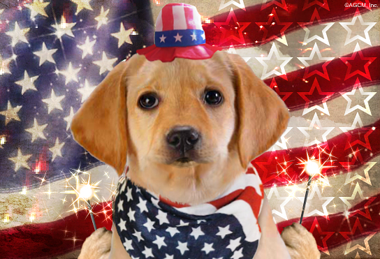 Happy Flag Day card - an patriotic puppy in red, white and blue holding sparklers in front of an American flag.